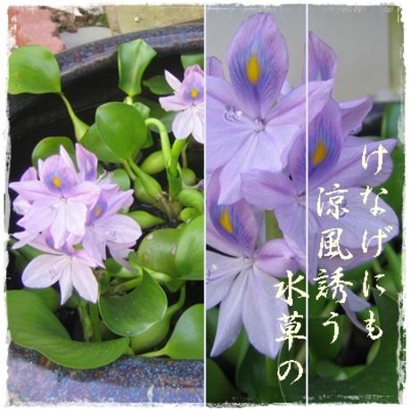 Mizukusa_4