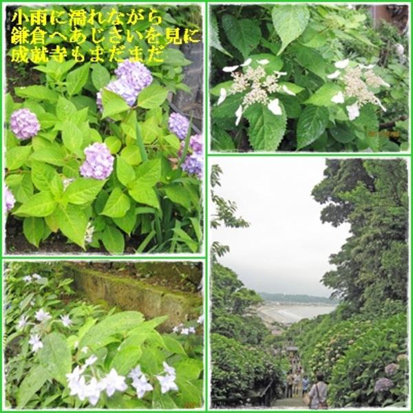 Photoscape_kamakuracats