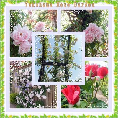 Rose_garden