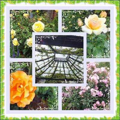Rose_garden_2