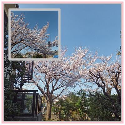 Sakurascape_2